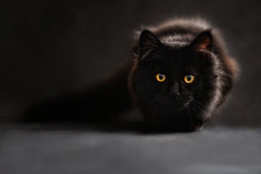 cat-silhouette-cats-silhouette-cat-s-eyes